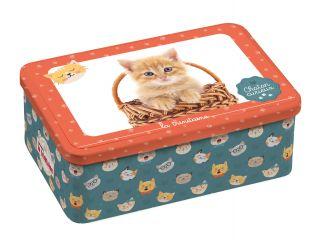 Coffret chaton curieux